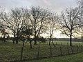 Nature à Parcey (Jura).JPG