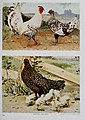 Nature neighbors, embracing birds, plants, animals, minerals, in natural colors by color photography, containing articles by Gerald Alan Abbott, Dr. Albert Schneider, William Kerr Higley...and other (14565247928).jpg