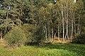 Nature reserve Dobrockovske hadce in autumn 2011 (20).JPG