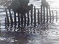 Naturschutzgebiet Ewiges Meer 31-10-2018 Chr Didillon DSC01778 (92).jpg