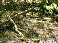 Naturschutzgebiet Tävsmoor Kreis Pinneberg (Schleswig-Holstein) 02.JPG