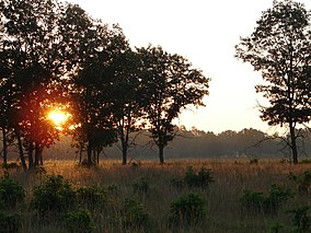 Necedah evening savanna (5447888509).jpg