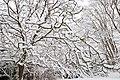 Neige à Saint-Rémy-lès-Chevreuse le 7 février 2018 - 09.jpg