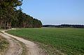 Neuendettelsauer Wald 0148.jpg