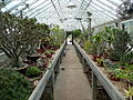New Orleans Botanical Garden Greenhouse 2011.jpg