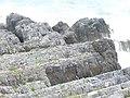 Newton Cliff - geograph.org.uk - 1480643.jpg