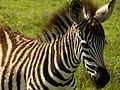 Ngorongoro Crater (62) (13962031290).jpg