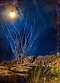 Night Poured Over the Desert (34629253102).jpg