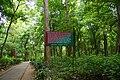 Nilambur teak forest 03763.JPG