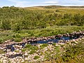 Norway Finnmark River P1290528.jpg
