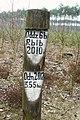 Notec Forest, Mialy, Debogora 05.JPG