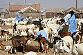 Nouakchott goat market.jpg