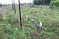 Numida meleagris in Dierenpark Zie-ZOO.jpg