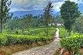 Nuwara Eliya, Sri Lanka - panoramio (2).jpg