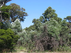 OIC bunbury eaton bush on lofthouse.jpg