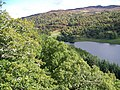 Oak trees above the Tummel - geograph.org.uk - 1533801.jpg