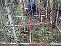 Obstacle course? Nope, just one of the 1100 study plots sampled in this study. Biologist Fleur Nicklen does her best to navigate around trees to document every species. (8445623715).jpg