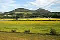 Oilseed rape fields at Gattonside - geograph.org.uk - 1374983.jpg