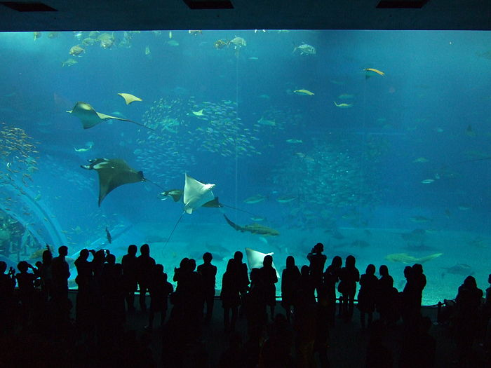 Okinawa Churaumi Aquarium observation room.jpg