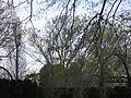 Oklahoma 040 - Flickr - GregTheBusker.jpg