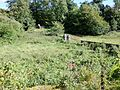 Old Laigh Borland walled garden, Dunlop, East Ayrshire, Scotland. View towards Over Borland.jpg