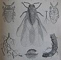Ottův slovník naučný - obrázek č. 3114.JPG