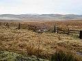 Otterburn Ranges near Ridlees Cairn - geograph.org.uk - 658133.jpg