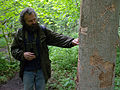 Our guide Arek indicating feeding signs of White-backed Woodpecker, Białowieża Primeval Forest, Poland (4664479588).jpg