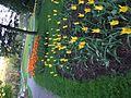 Owers in a garden.jpg