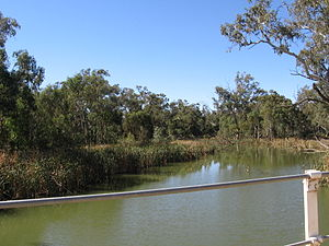 Lachlan River - The Lachlan River at Oxley