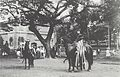 Pāʻū riders on Iolani Palace ground, c. 1885.jpg