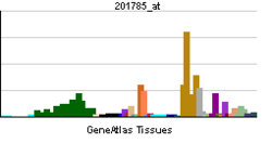 PBB GE RNASE1 201785 at tn.png