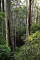 Paque Nacional de Tasman 5.jpg