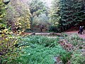 Paradise Bottom in Leigh Woods - geograph.org.uk - 1592261.jpg