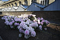 Paris - Flowers at the Palace de Luxembourg - 3047.jpg