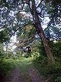 Park dworski Czachórskich (4).jpg