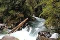 Parque Nacional Puyehue.jpg