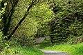 Path, Crawfordsburn Glen (1) - geograph.org.uk - 784972.jpg