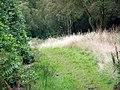 Path, Trout Pond Wood - geograph.org.uk - 1476798.jpg