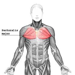dolor muscular pectoral izquierdo y espalda