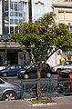 Peiraias drzewo.jpg