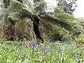 Penjerrick Garden Bluebells.jpg