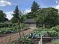 Peter Navarre Cabin garden.jpg