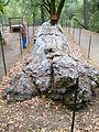 Petrified Forest - Stierch H.jpg