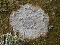 Phaeographis dendritica (Ach.) Müll. Arg 723567.jpg
