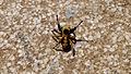 PikiWiki Israel 43681 spider.jpg