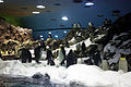 Pinguinanlage im Loro Park.jpg