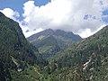 Pinus gerardiana India17.jpg