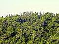Pinus halepensis forest, near Dubrovnik, Croatia - Stiller Beobachter.jpg