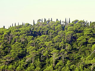 Illyrian deciduous forests Terrestrial ecoregion of Europe